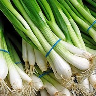 Feast - 10.000 sem - Seminte de ceapa de legatura cu sistem radicular puternic si frunze de culoare verde inchis nu formeaza bulbi iar foliajul este erect si capacitate buna de crestere de la Takii Seeds