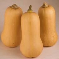 Hannah F1 - 500 sem - Seminte de dovleac cu fructe de tip Butternut vizibil costate ce cantaresc in medie 2 kg avand coaja bej si miezul portocaliu de la Enza Zaden