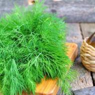 Marar (4 grame), seminte de marar planta anuala, aromat, Agrosem