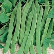 Marconi (10 gr) seminte de fasole urcatoare verde lata, soi timpuriu , Agrosem
