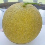 Marisole F1 - 500 sem - Seminte de pepene galben tip Galia timpuriu forma rotunda gust aromat foarte productiv putand fi cultivat in sere solarii sau in camp de la Esasem
