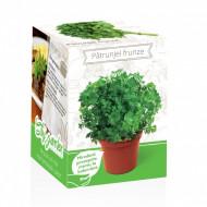 Patrunjel frunze netede - Kit plante aromatice