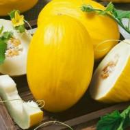 Pepene galben Yellow Canary (1 kg), seminte de pepene galben miez alb, zemos, aroma deosebita, Agrosem