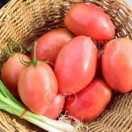 Pink Fresh - 5 gr - Seminte de Rosii Roz pentru prelucrare si conservare de la Opal