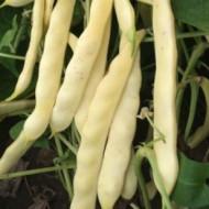 Plador (25 kg) seminte fasole pitica galbena lata, frageda, fara ate, Agrosem