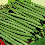 Processor (100 grame) seminte fasole pitica verde, timpurie, pastai lungi, Agrosem