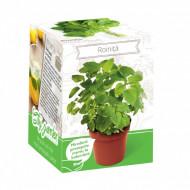 Roinita - Kit plante aromatice