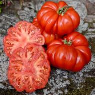 Rosii Costoluto Fiorentino (0.5 gr), seminte tomate soi foarte productiv, Florian Bulgaria