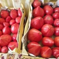 Rozov Dar (Dar Roz), 500 seminte rosii tip Inima de Bivol Gigant, Florian Bulgaria