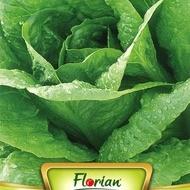 Salata VALMAINE - 3 gr - Seminte de Salata Soi semitimpuriu capatana mare Florian Bulgaria