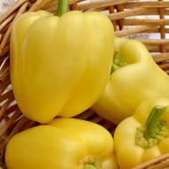 Seminte ardei gras Hildi (0.5 g), culoare galbena, Agrosel