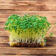 Seminte bio pentru germeni de mustar (50 g), seminte pentru obtinerea de germeni sau micro-verdeturi de mustar, Kertimag