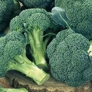 Seminte broccoli Ironman F1 (1000 seminte), semitimpuriu, Seminis