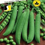 Seminte de Mazare Gloriosa (25 kg), soi extratimpuriu de mazare de gradina tip Ran-1