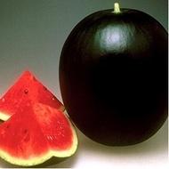 Seminte pepene verde Pata Negra F1 (1000 seminte), verde inchis, Seminis
