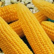 Seminte porumb de floricele Pop Corn (1 kg), Agrosem