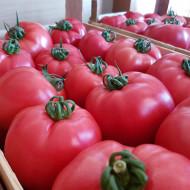 Seminte rosii Pink Rock F1 (1000 seminte), tomate roz, crestere nedeterminata, Yuksel