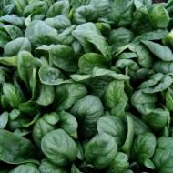 Spanion F1 - 50.000 sem - Seminte de spanac cu frunze ovale fine groase de culoare verde inchis timpurietate medie potrivit pentru cultura de vara-toamna sau primavara-vara destinat consumului in stare proaspata si pentru procesare de la Cora Seeds