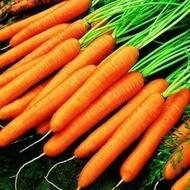 Tito (100 gr) seminte de morcovi de tip Nantes cu diametru mare, adaptat pentru soluri grele, Hazera