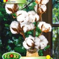 Bumbac  - 1.5 gr - Seminte Bumbac unul din cele mai raspandite soiuri de bumbac