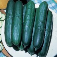 Castraveti Lungo Ortolani(60 seminte) de castraveti lungi de salata, Prima Sementi