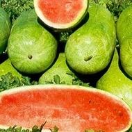 Charleston Gray - 100 gr - Seminte Pepene Verde Soi Semitimpuriu Suculent si Dulce de la Raci Italia