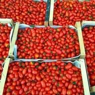 Cherry Mila (150 seminte) tomate cherry in forma de prunisoare cu crestere nedeterminata, Laktofol