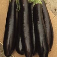 Claudia F1 - 500 sem - Seminte de vinete cu fructe ferme alungite excelent fixate pe planta ajungand la o greutate de 250-300 grame/fruct cu maturitate timpurie de la ISI Sementi