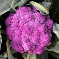 Conopida Sicily Purple (300 seminte), conopida mov pentru consum proaspat, Agrosem