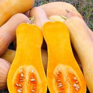 Dovleac Butternut Rugosa (3.000 seminte) seminte de dovleac placintar cilindric-alungt, Agrosem