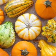 Dovlecel ornamental mix (1,5 g), seminte de dovleac decorativ cu fructe in diferite combinatii de forme si culori, Agrosem