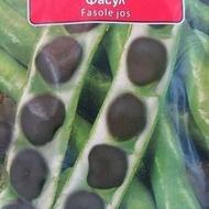 Fasole Neagra Pastai Stara Zagora - 100 gr - Seminte Fasole Neagra Pastai Soi Timpuriu Italia