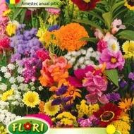 Flori Anuale Pitice Mix - Seminte Flori Pitic Mix de la Florian