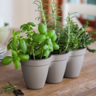 GHIVECI IVY HERBS WARM GREY, Keter