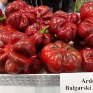 Gogosar Rotund Bulgaresc - 10 gr - Seminte Ardei Gogosar bulgaresc, Opal