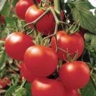 Lilos F1 - 1000 sem - Seminte de tomate cu fructe ferme uniforme de culoare rosu intens avand o greutate cuprinsa intre 140-200 grame/fruct ce rezista bine la transport si pastrare de la Rijk Zwaan