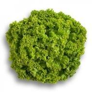 Locarno - 5000 sem - Seminte de salata creata tip lollo cu o perioada de vegetatie cuprinsa intre 30-45 de zile destinata cuturilor in camp si spatii protejate pe toata durata anului de la Rijk Zwaan