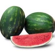 Odyssey F1 - 500 sem - Seminte de pepene verde cu fructe deosebit de calitative continut ridicat de zahar structura interioara uniforma destinat celor ce isi doresc calitate de la Sakata