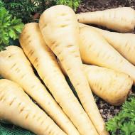 Patrunjel radacina Berliner (30 grame), seminte de patrunjel radacina, semilungi, pulpa dulce, Agrosem