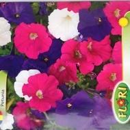 Petunia Mix - Seminte Flori Petunia Mix Planta Anuala de la Florian