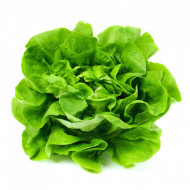 Riana seminte de salata (5 gr) soi romanesc capatana compacta SCDL Buzau