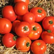 Roker - 10 gr - Seminte Tomate pentru Camp Soi Sarbesc de la Superior Seeds