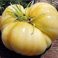 Rosii Albe Beefsteak - 0.2 gr - Seminte Rosii Albe Soi Exotic Alb spre Galben Deschis