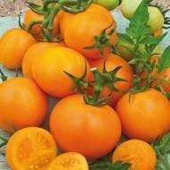 Rosii Portocalii (ORANGE) - 0.5 gr - Seminte Rosii Zloti Ozarovski de culoare portocalii