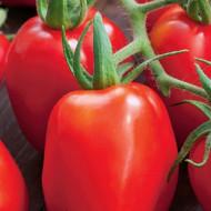 Rosii Roma VF (300 seminte), tomate soi semitardiv fructe ovale, gust placut, Agrosem