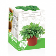 Rucola - Kit plante aromatice