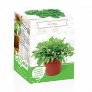 Rucola - Kit plante aromatice