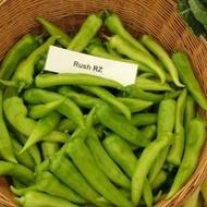 Rush F1 - 100 sem - Seminte de ardei iute semitimpuriu pentru sere si solarii culoare verde inchis de la Rijk Zwaan
