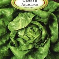 Salata Attraction - 3 gr - Seminte Salata Soi Timpuriu Capatana Marime Meide