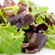 Salata Baby Leaf (2500 seminte) de salata, o varietate cu frunze mici excelente, Florian